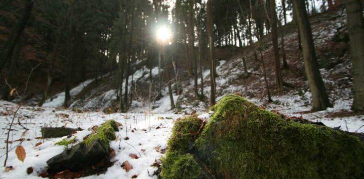 Fotowanderung Schmilkaer Gebiet
